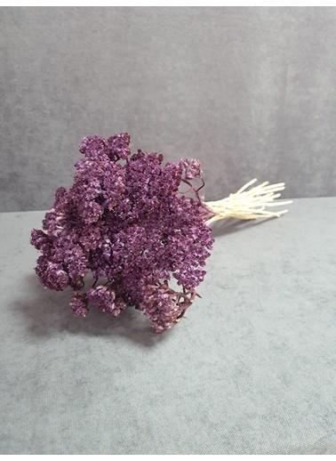 Kuru Çiçek Deposu Kuru Çiçek Şemsiye Otu Demeti 45 Cm Bordo Mor